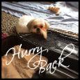 Hurry Back!