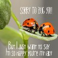 Home : Love : For Your Sweetheart - Happy You're My Lady!