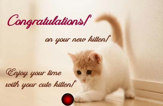 congratulations on your new kitten  free congratulations