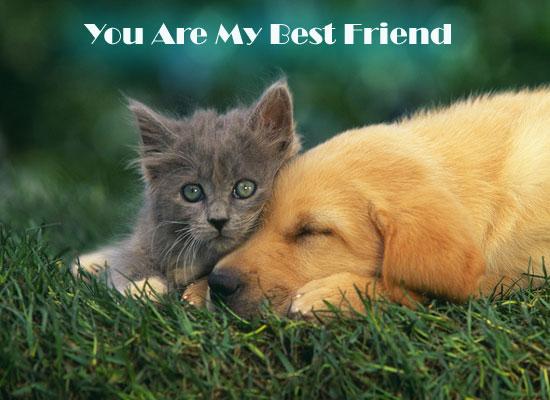 Pets Friendship.