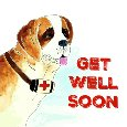 Get Well Soon From Saint Bernard Dog.