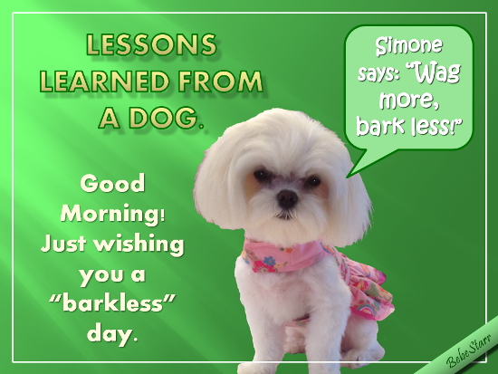 Wag More, Bark Less!