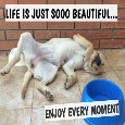 Home : Pets : Have a Great Day - Life Is Just So Beautiful.