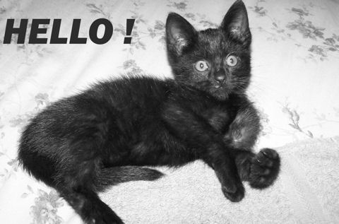 Hello Black Kitten.