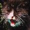 Tom Cat.