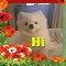A Cute Hi-Hello Card For You.