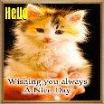 Home : Pets : Hi-hello - Cute Kitty Says Hello.