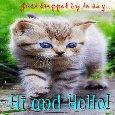 Kitty Says Hi And Hello.