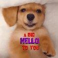 Home : Pets : Hi-hello - A Big Hello Ecard.
