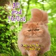 Home : Pets : Hi-hello - A Hi And Hello Card From Kitty.