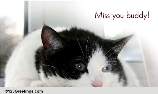 miss you buddy  free miss you ecards  greeting cards