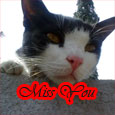 Miss My Pet.