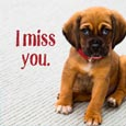 Puppy Misses You.