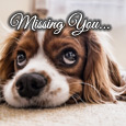 Home : Pets : Miss You - How Long Can I Stay Far From You!