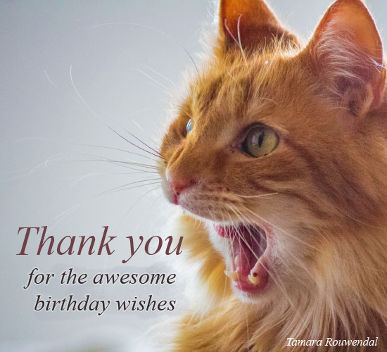 A Meowing Thank You...