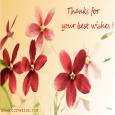 Best Wishes.
