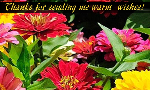 For Warm Wishes...