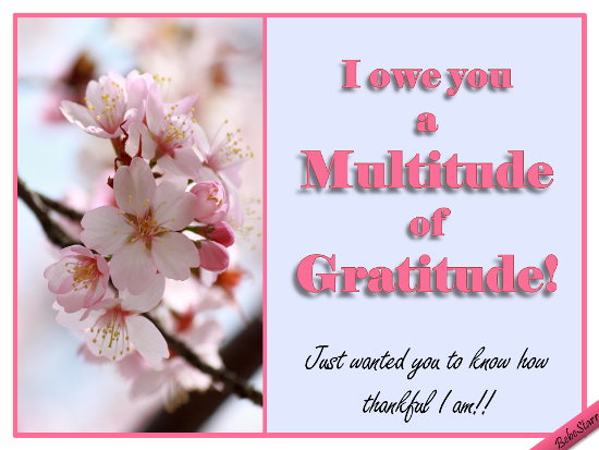 Multitude Of Gratitude.