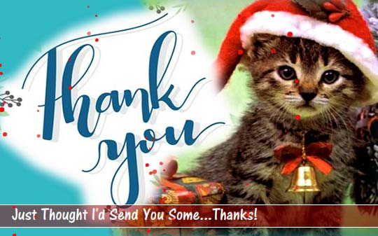 cute kitten thank you card  free for everyone ecards