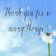 Dandelion Thank You.