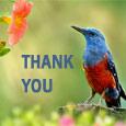 Express Your Gratitude!