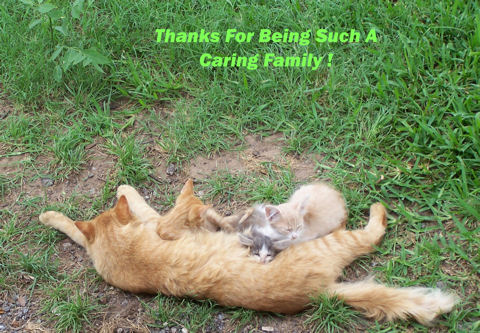 Thank You Family Cats.
