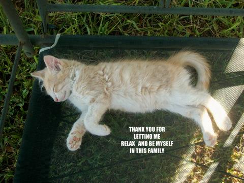 Family Thank You Kitten.