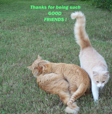 Thank You Friends Cats.