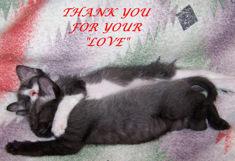 Thank You For Love, Kittens.