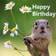 Squirrel's Birthday Wish!