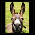 Donkey Birthday Greeting For Friend.