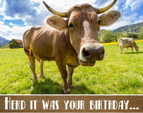 Herd It Was Your Birthday.