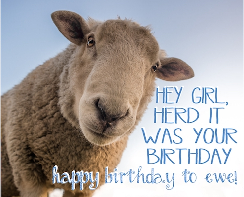 Hey Girl, Happy Birthday To Ewe!