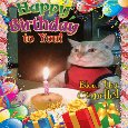 Funny Birthday Cat Blows The Candle.