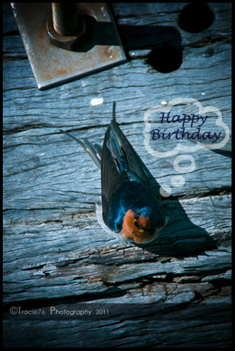 A Little Bird Told Me It's Ur Bday.