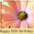 50th Birthday Gerbera Daisy Flower.