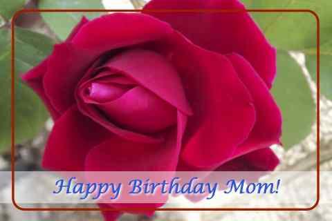 Happy Birthday Mom With Rose