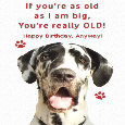 Great Dane, Funny Old Age Birthday.