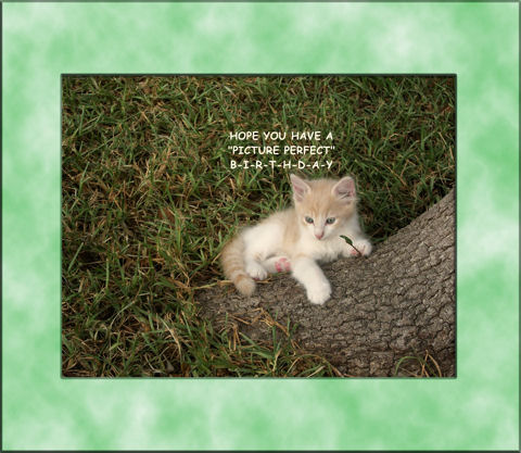 Birthday Wishes Kitten Free ECards Greeting Cards