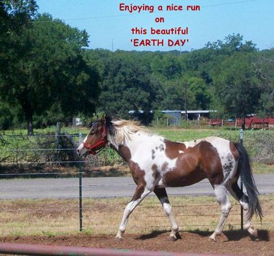 Earth Day Horse.