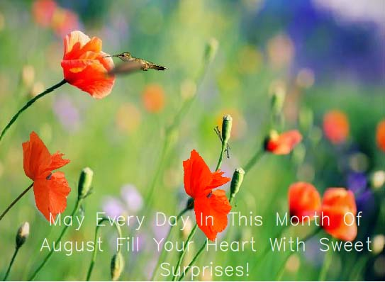 Send August Flowers Ecard