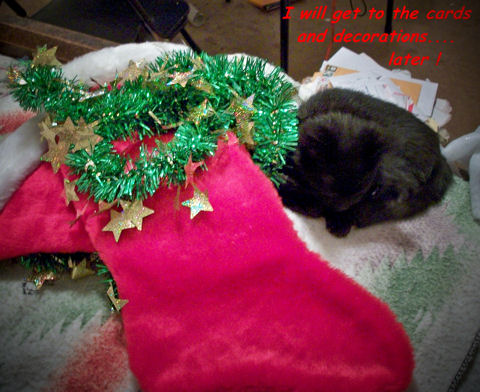 A Cat's Holiday Humor.