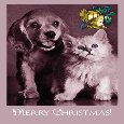 From Your Pets Dog & Cat At Christmas.
