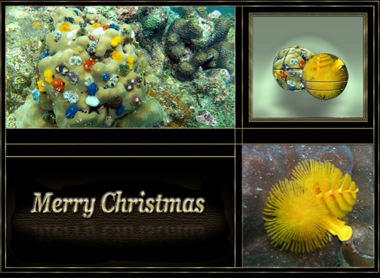 Colorful Underwater Christmas.