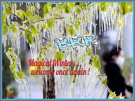 Welcome The Joyful  Winter Season.