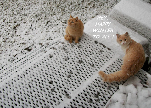 Happy Winter Cats.