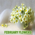 Beautiful February Blooms...