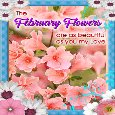 February Flowers Ecard For Your Love.