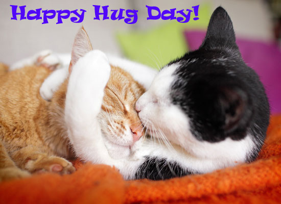 Cute Kitties Hug.