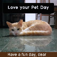 Love Your Pet Day , Cat Lover.